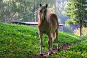 Osteroporoza postihuje nejen lidi, ale také koně a psy.