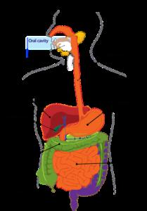 Rakovina žlučníku
