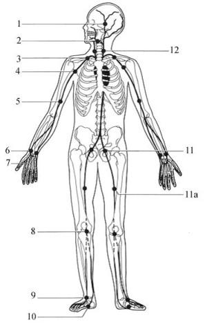 Tlakové body na lidském těle