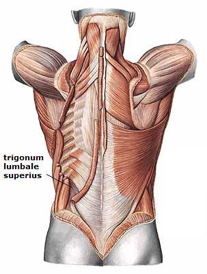 Trigonum lumbale superius